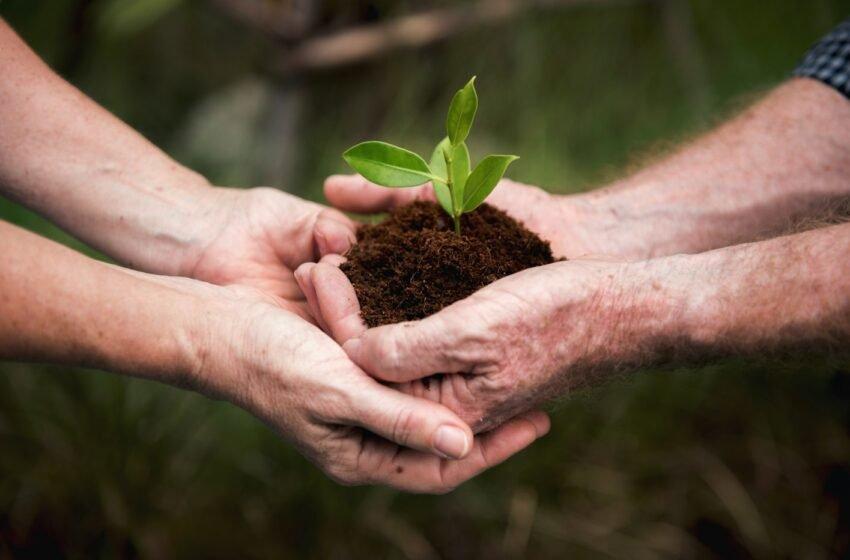 Mercado Verde: possibilidades de renda sustentável