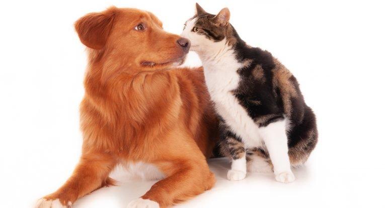 """""""Quem adota um animal tem o dever de promover assistência à saúde, à alimentação, ao lazer e à moradia"""", diz especialista."""
