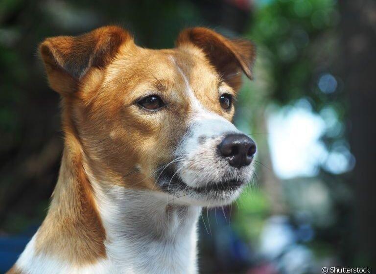 Pesquisadora realiza estudos sobre a leishmaniose visceral canina